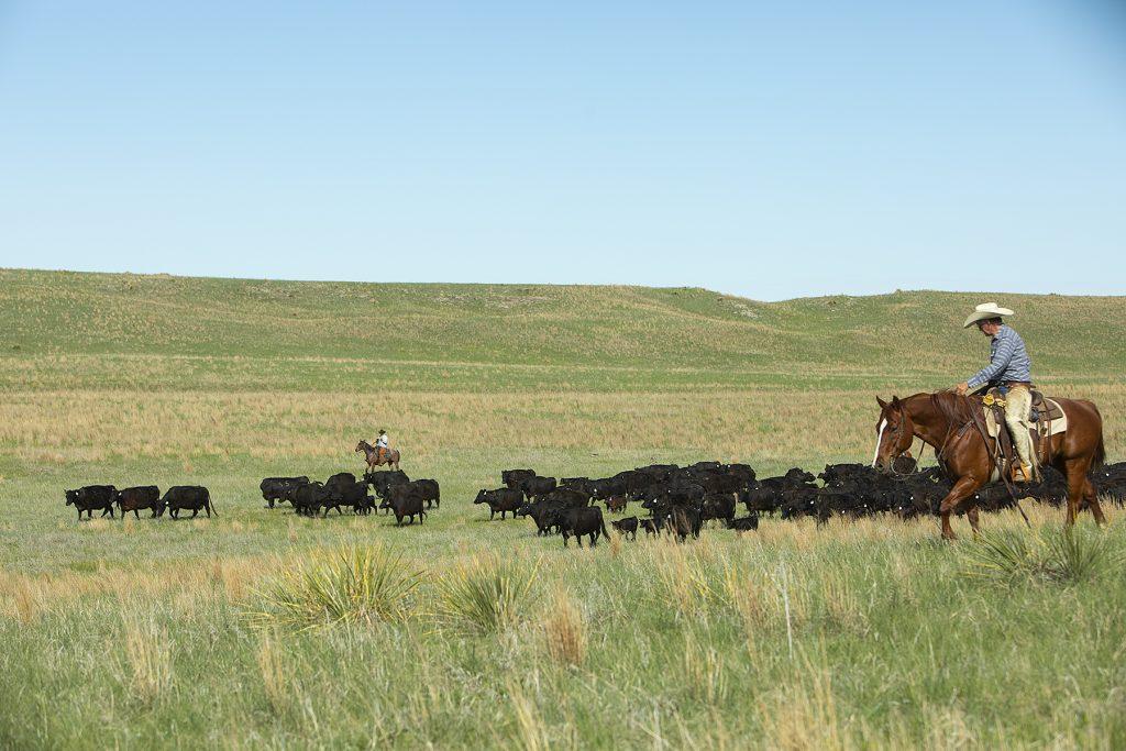 rancher chasing grass