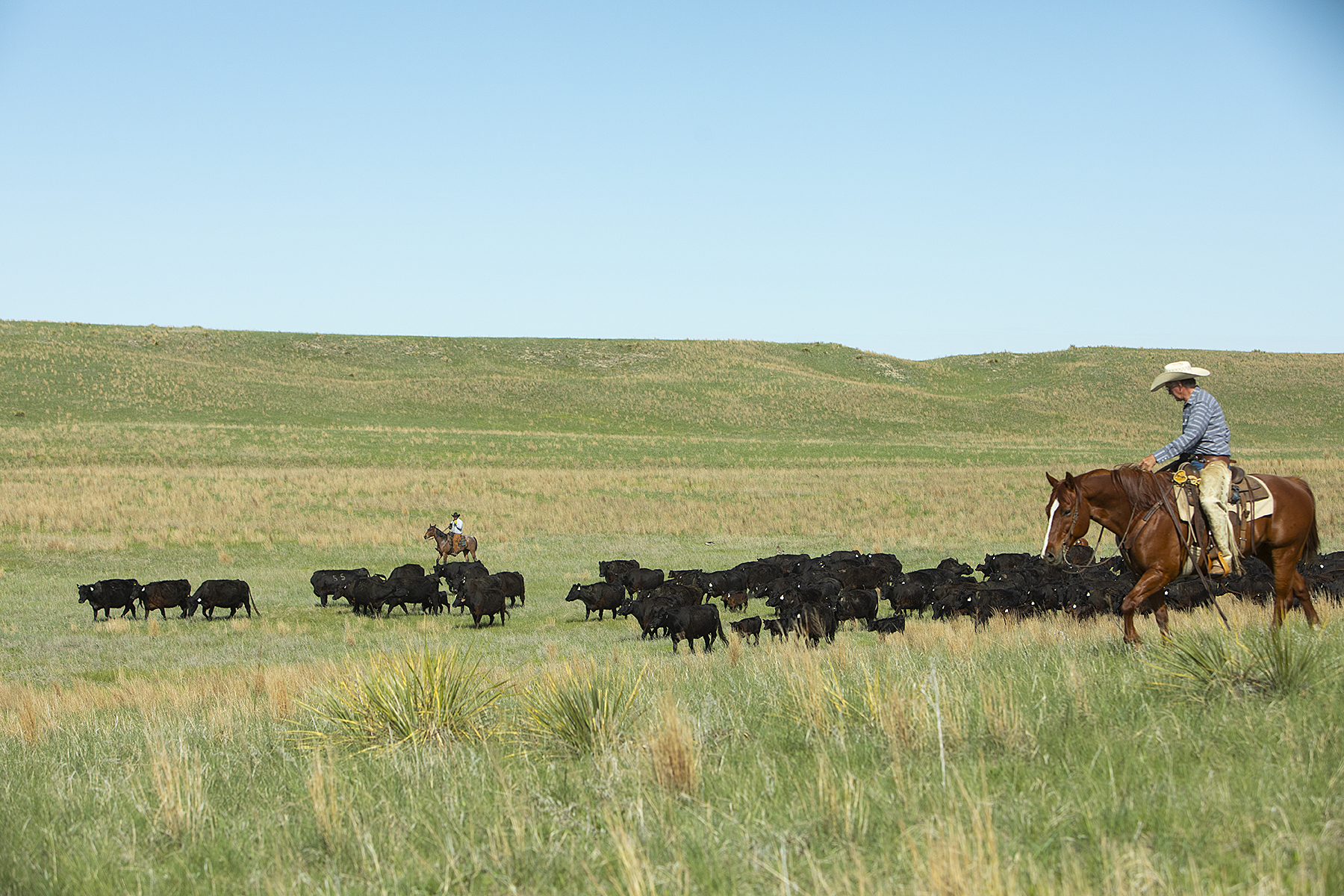Grazing land is important to ranchers