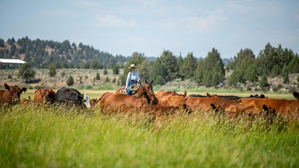 Valerie Coe works cattle