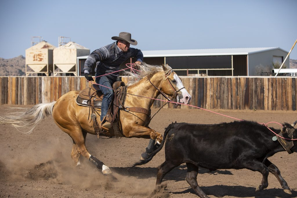 Brand New Step was one of Western Horseman's horse models